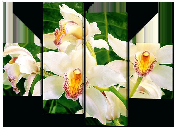 Белая орхидея листья