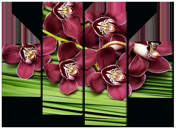 Бархатная лиловая орхидея