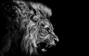 лев на чёрном