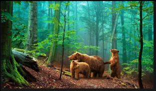 Mедведи