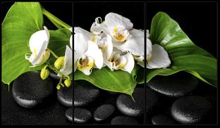 Ветка орхидеи и камни