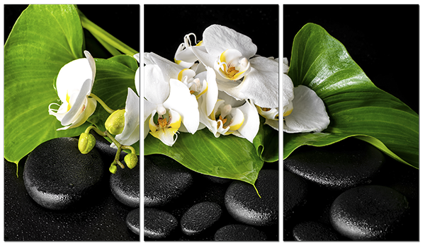Камни и ветвь орхидеи