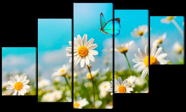 Бабочка садиться на ромашку
