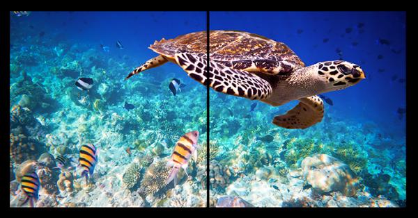 Красивая морская черепаха