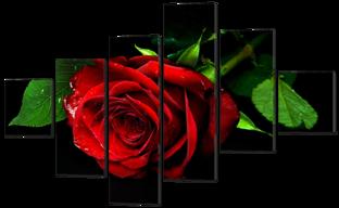 Роза на чёрном 178* 115см