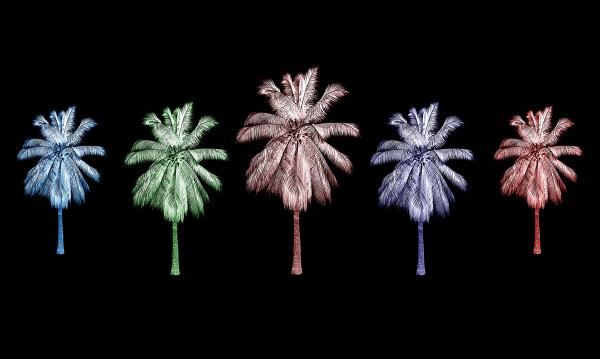 "Абстракция ""Разноцветные Пальмы"""
