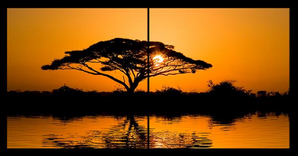 Африканское дерево на закате
