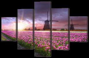 Мельницы и тюльпаны