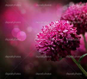лиловые цветы