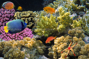 кораллы и рыбы