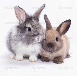 два детёныша кролика