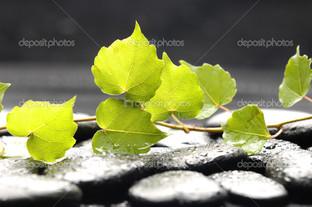 зелёные листья на камнях