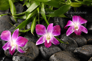 орхидея и камни бамбук листья