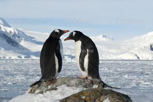 два пингвина на склоне