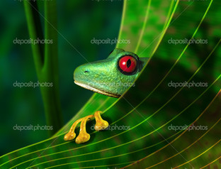 лист лягушка