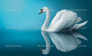 лебедь на голубом фоне