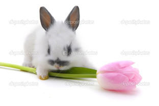 кролик с цветком