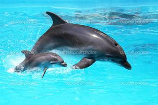 дельфин с ребенком плавающий в воде