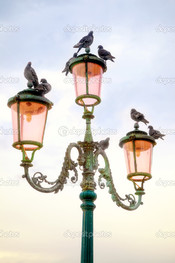 голуби на фонаре
