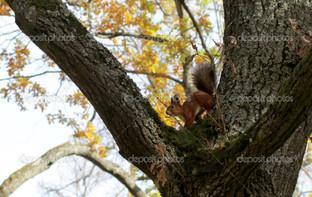 белка высоко на дереве