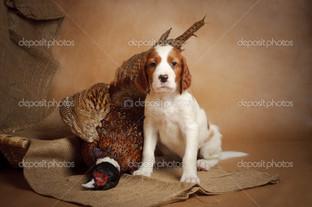 щенок и фазан
