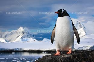 пингвин на природе