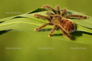 паук на траве