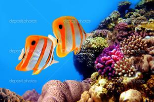 две рыбы под водой