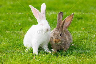 кролики на травке
