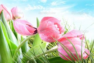 тюльпаны в траве