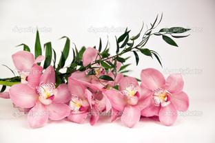 коралловая орхидея
