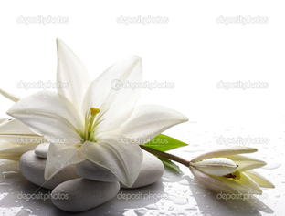 белая лилия на белых камнях