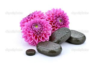 пурпурные цветы на белом