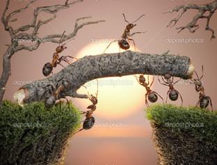 муравьи мост