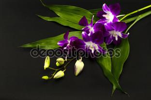 букет орхидеи на чёрном