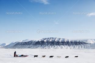 Собака санки экспедиция