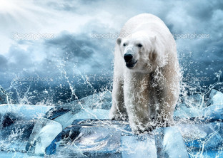 белый полярный медведь на льдине