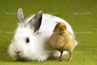кролик и цыплёнок на траве