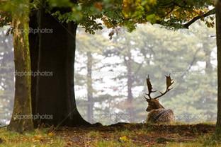 олень под деревом
