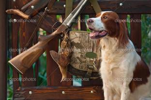 собака пистолет и ружье