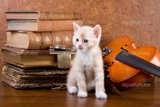 книга котёнок и скрипка