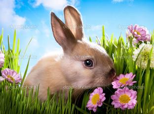 бежевый кролик