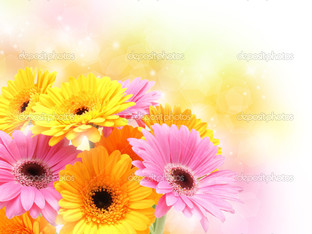 жёлто розовые цветы