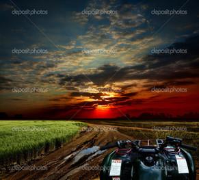 вечер пшеничное поле